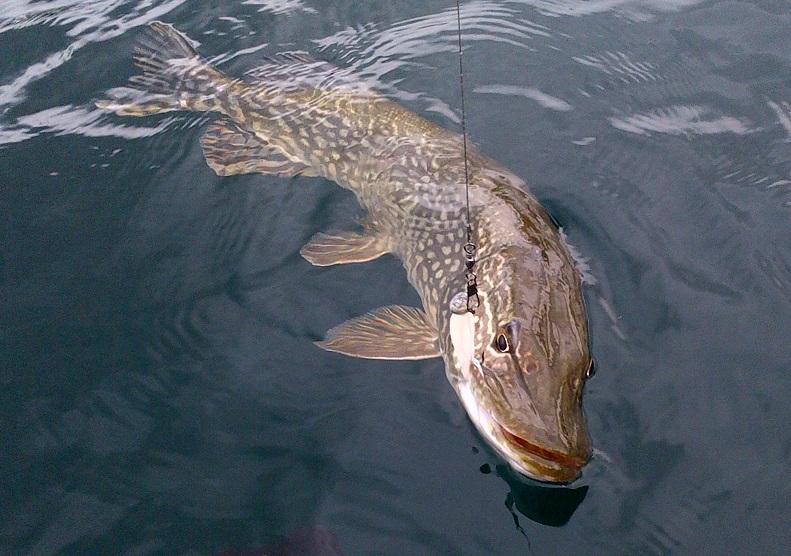 Pictures pike fishing on lake geneva for Lake lure fishing