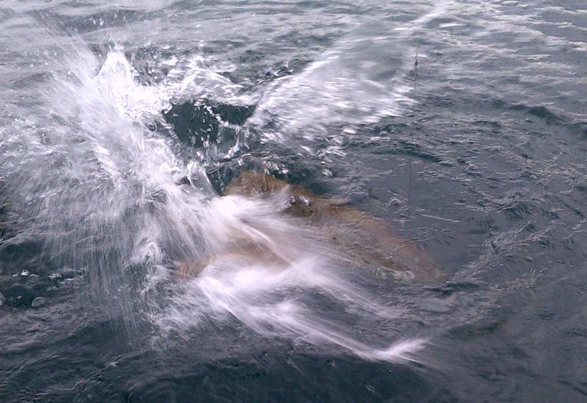 Lac léman pêche aux leurres